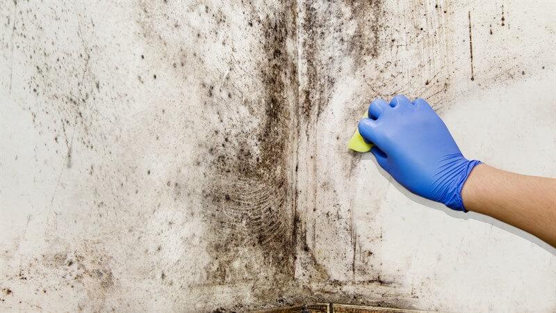 קולט לחות לבית – אם יש לכם עובש או רטיבות בארון זה הפתרון בשבילכם